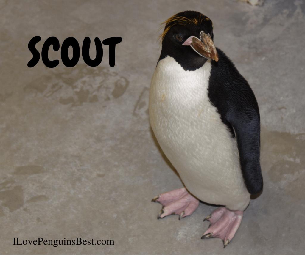 Cute Penguin Names