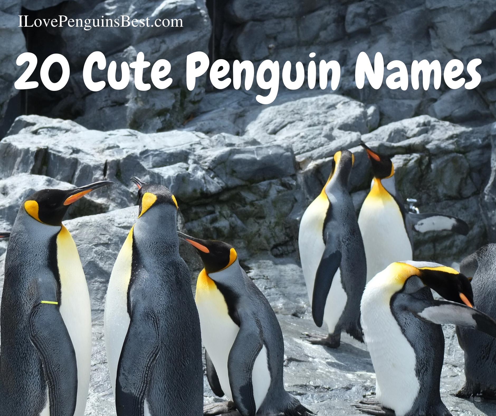 20 Cute Penguin Names
