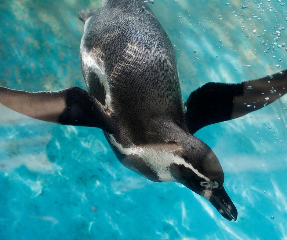 Fun Penguin Facts