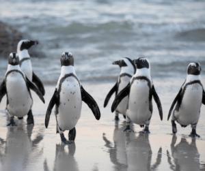 Penguin Party Decorations