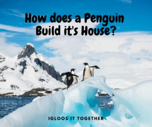 Penguin Jokes